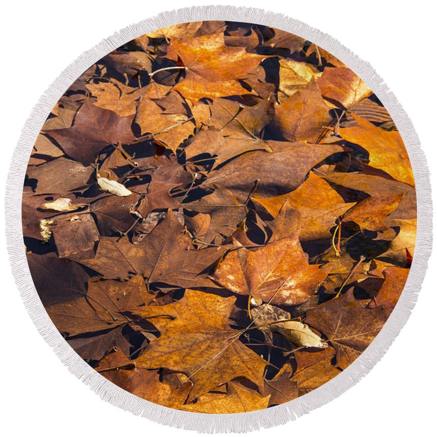 Lost Maples State Natural Area Round Beach Towel featuring the photograph Dried Leaves by Bob Phillips