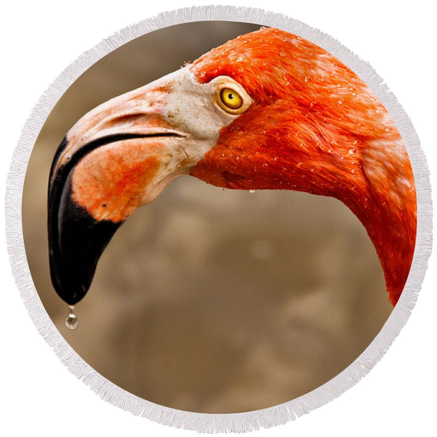 Flamingo Round Beach Towel featuring the photograph Dripping Flamingo by Christopher Holmes