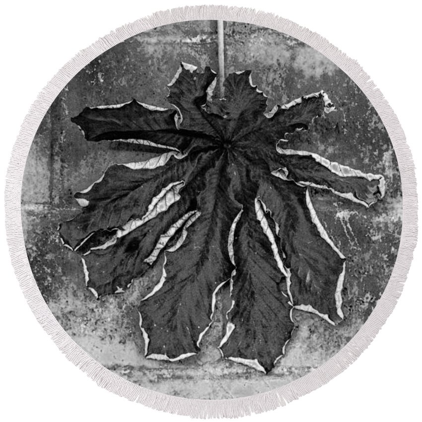 Dry Round Beach Towel featuring the photograph Dry Leaf Collection Bnw 1 by Totto Ponce