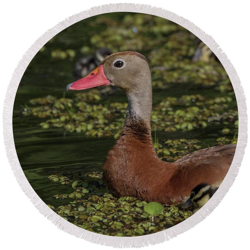 Duck Round Beach Towel featuring the photograph Duck 10 by Kristopher Bedgood