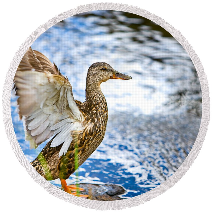 Lake Round Beach Towel featuring the photograph Duck by James O Thompson
