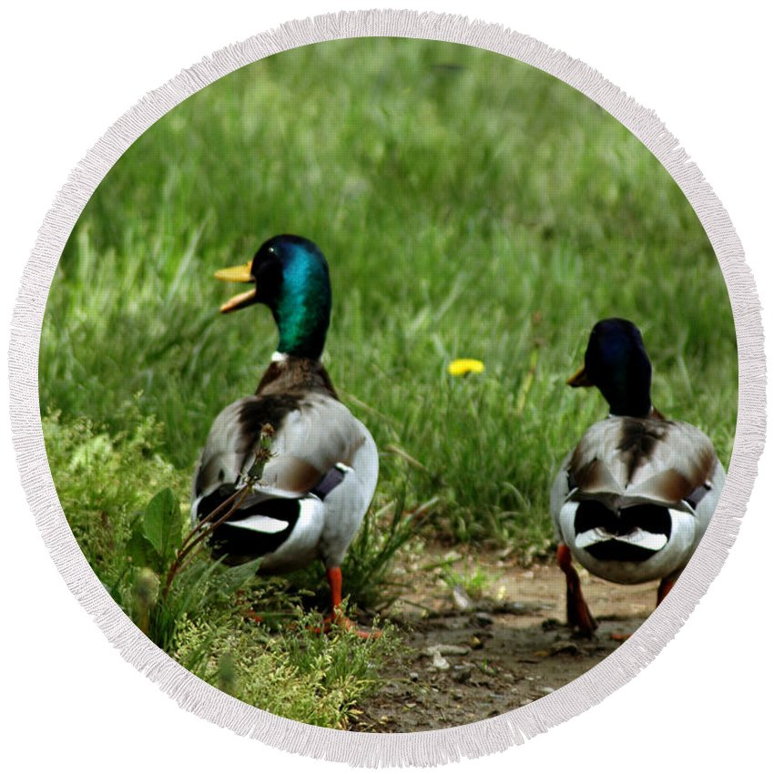Usa Round Beach Towel featuring the photograph Duck Talk At Frankenmuth Michigan by LeeAnn McLaneGoetz McLaneGoetzStudioLLCcom