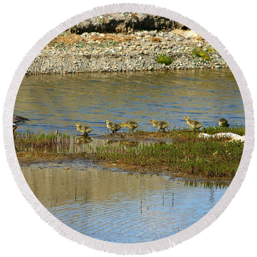 Ducks Round Beach Towel featuring the photograph Ducks In A Row by Anthony Jones