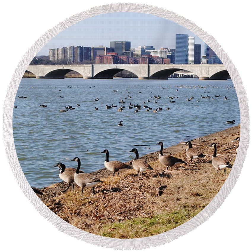 Washington Round Beach Towel featuring the photograph Ducks Of The Potomac by Jost Houk