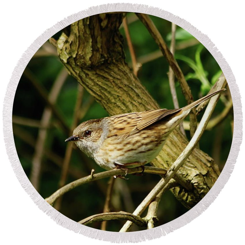 Dunnock Round Beach Towel featuring the photograph Dunnock In A Hedgerow by Jeff Townsend