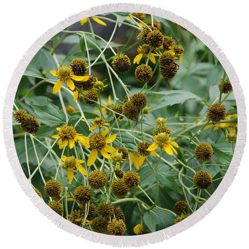 Macro Round Beach Towel featuring the photograph Dying Sun Flowers by Rob Hans