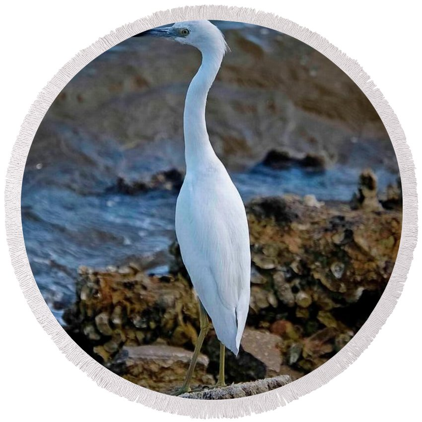 Egret Round Beach Towel featuring the photograph Eager Egret by DigiArt Diaries by Vicky B Fuller
