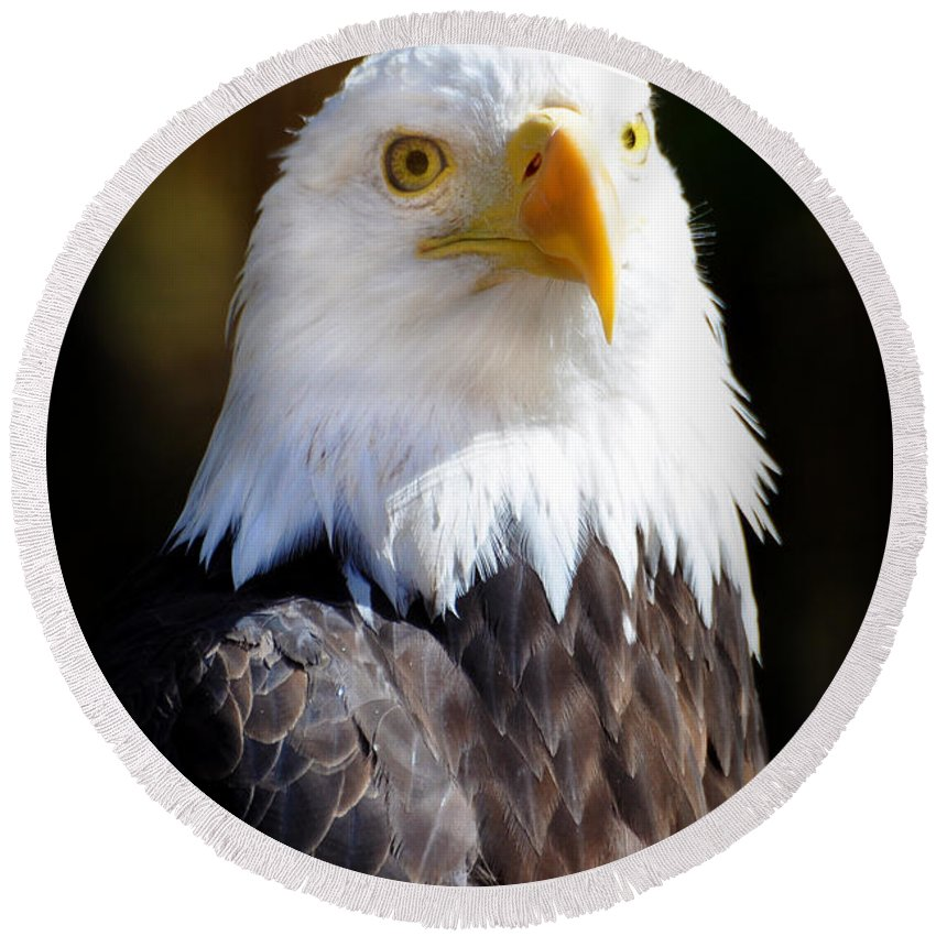 Eagle Round Beach Towel featuring the photograph Eagle 23 by Marty Koch