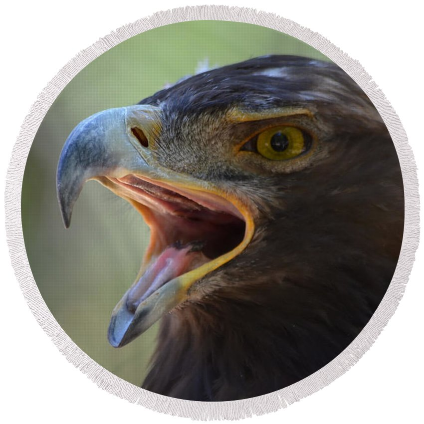 Nature Round Beach Towel featuring the photograph Eagle Cry by Barbara Matthews