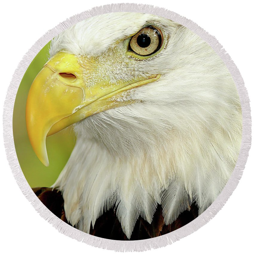 Bald Eagle Round Beach Towel featuring the photograph Eagle Eye by Dennis Goodman