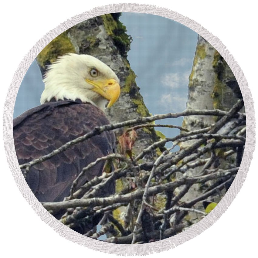Eagle Round Beach Towel featuring the photograph Eagle In Nest by Rod Wiens