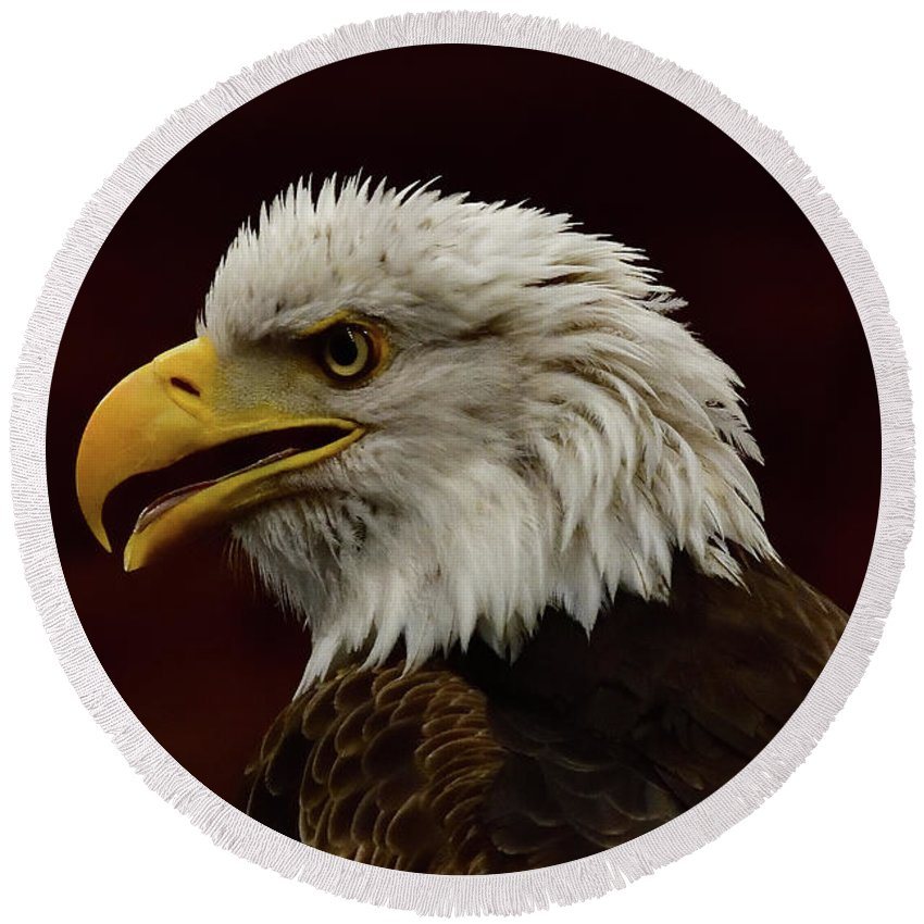 Eagle Round Beach Towel featuring the photograph Eagle In Profile by Mark Madion