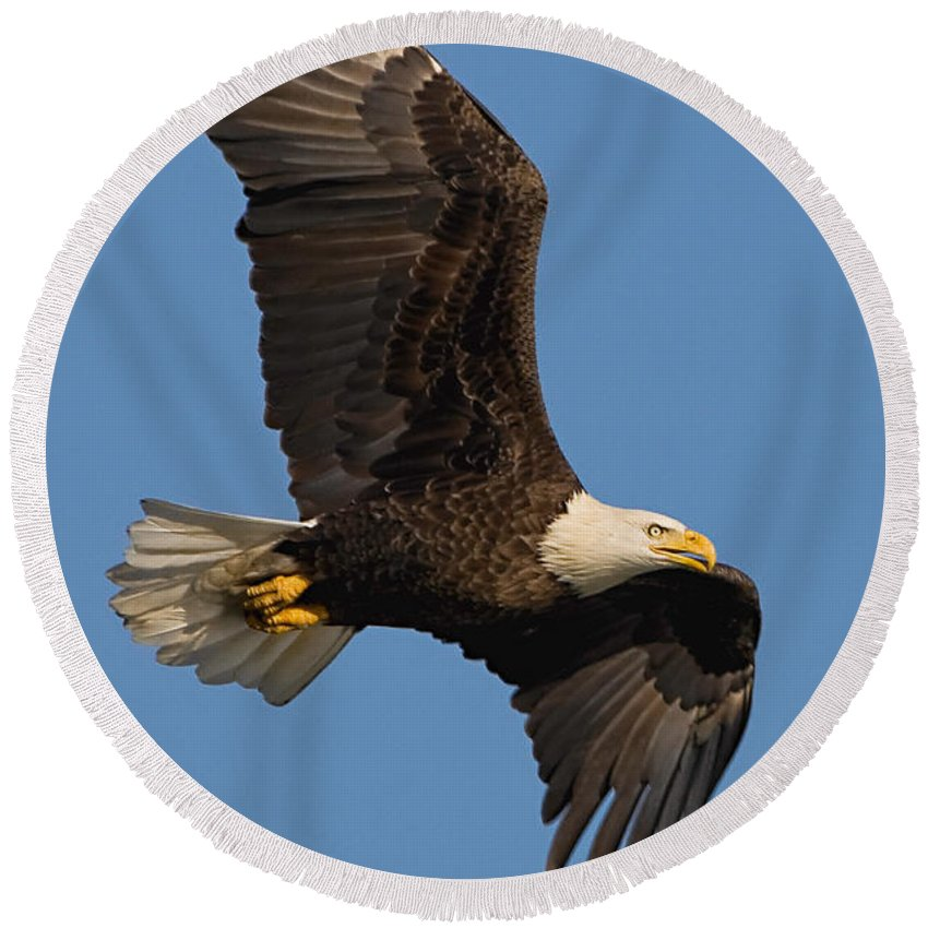 Eagle Round Beach Towel featuring the photograph Eagle In Sunlight by William Jobes