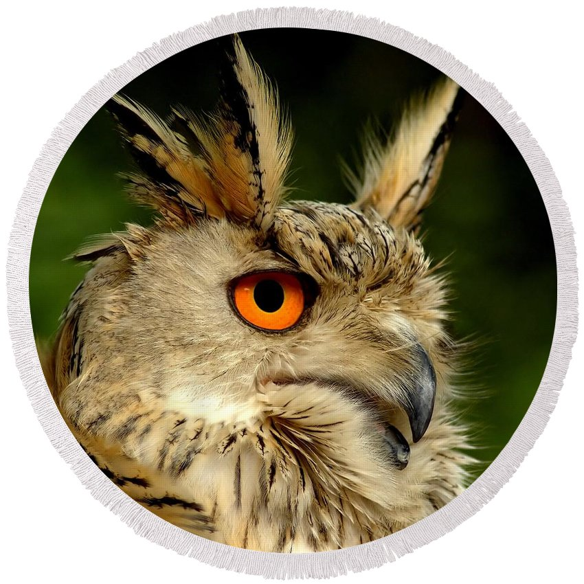 Wildlife Round Beach Towel featuring the photograph Eagle Owl by Jacky Gerritsen