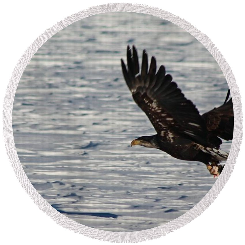 Eagle Round Beach Towel featuring the photograph Eagle_7894 by Joseph Marquis