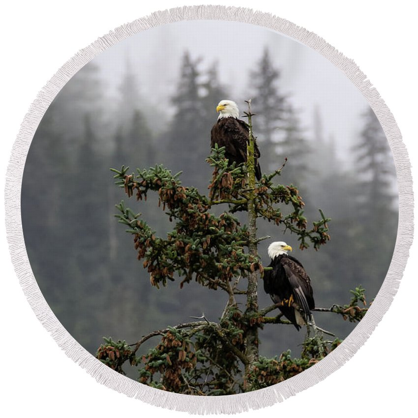 Haines Round Beach Towel featuring the photograph Eagles On Watch 1 by Charles Herbella