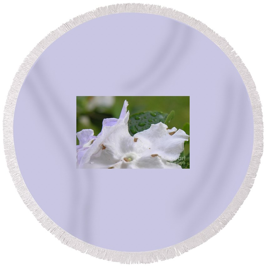 Flower Round Beach Towel featuring the photograph Easter Surprise by Richard Rizzo