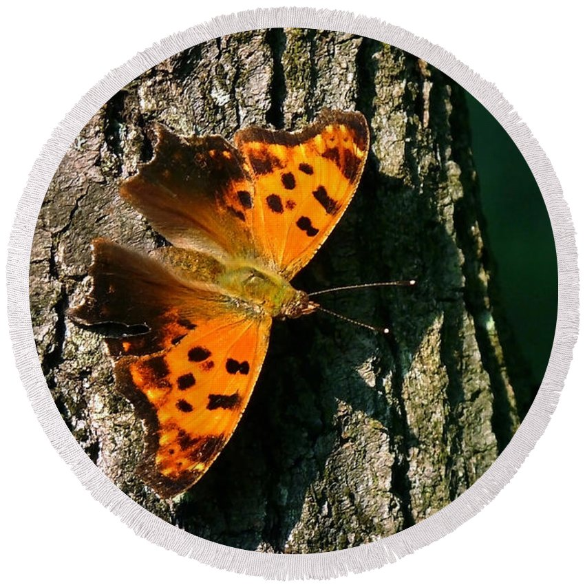 Eastern Comma Butterfly Round Beach Towel featuring the photograph Eastern Comma Butterfly by Christina Rollo