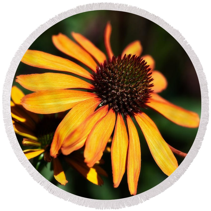 Asteraceae Family Round Beach Towel featuring the photograph Echinacea by Venetta Archer