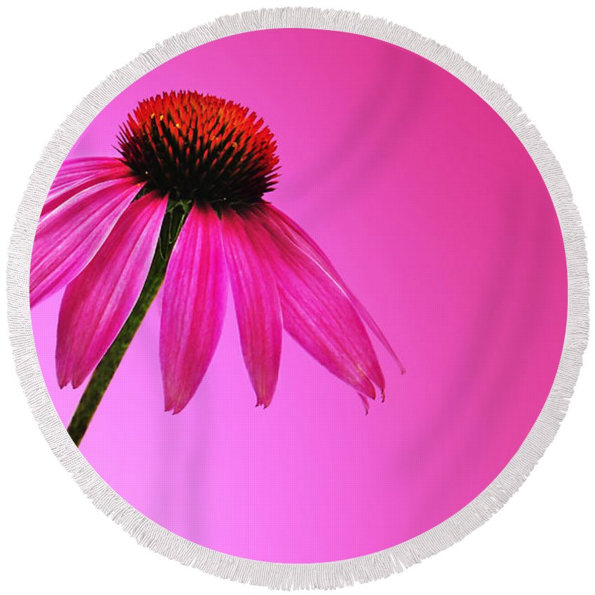 Ecinacea Round Beach Towel featuring the photograph Ecinacea Pink by Mark Rogan