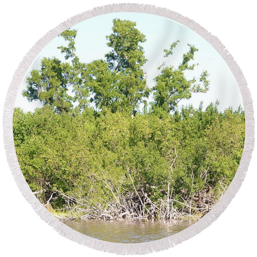 Mangroves Round Beach Towel featuring the photograph Eco Pond by Tammy Mutka