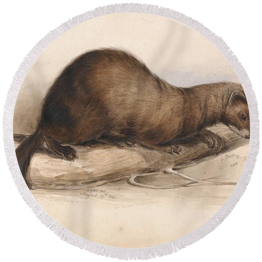 Art Round Beach Towel featuring the painting Edward Lear - A Weasel by Edward Lear