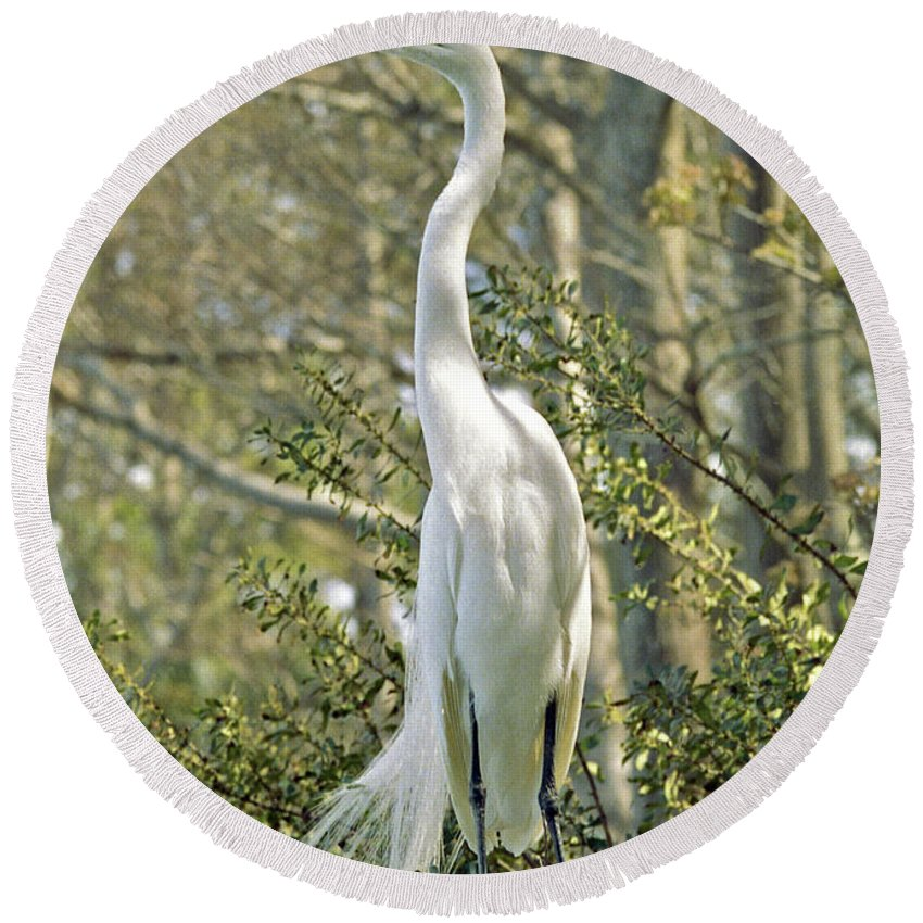 Egret Round Beach Towel featuring the photograph Egret 1 by Michael Peychich