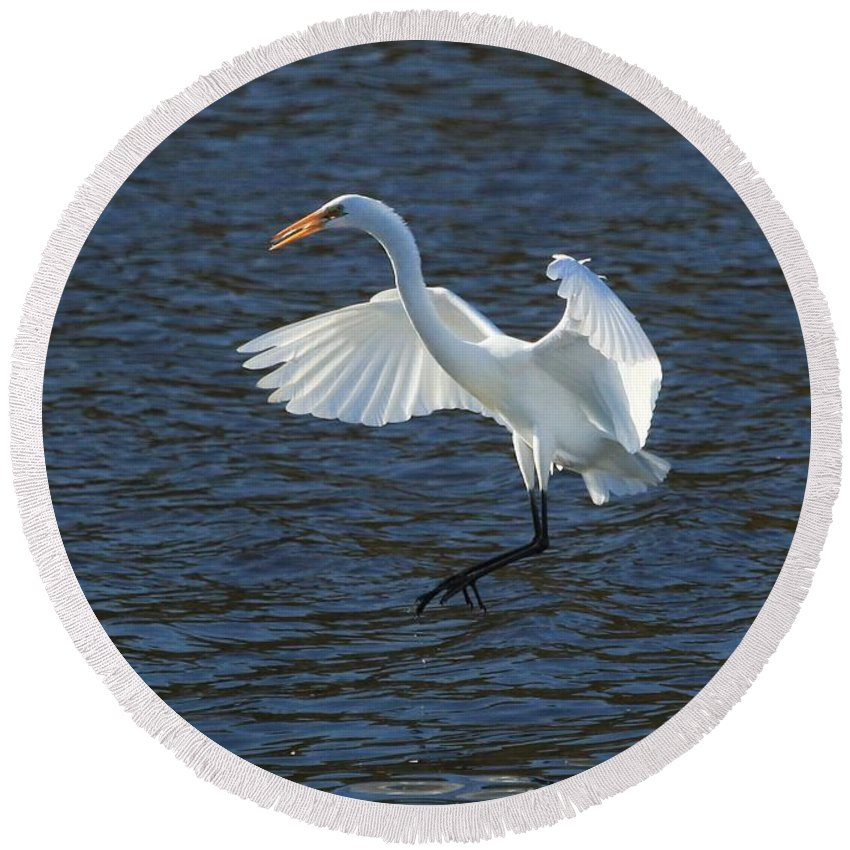 Water Birds Round Beach Towel featuring the photograph Egret Fishing by Janet Pugh