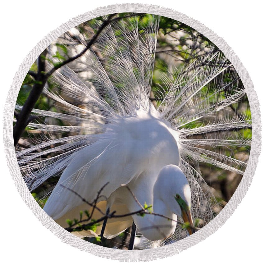 Egret Round Beach Towel featuring the photograph Egret In The Thicket by Lydia Holly