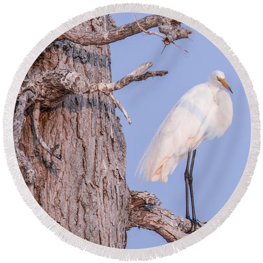 Egret Round Beach Towel featuring the photograph Egret In Tree by Nikki Vig