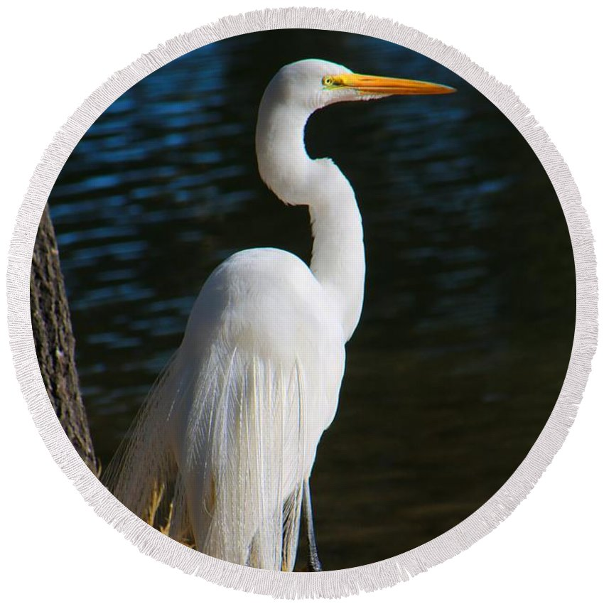 Egret Round Beach Towel featuring the photograph American Egret by Kathryn Meyer