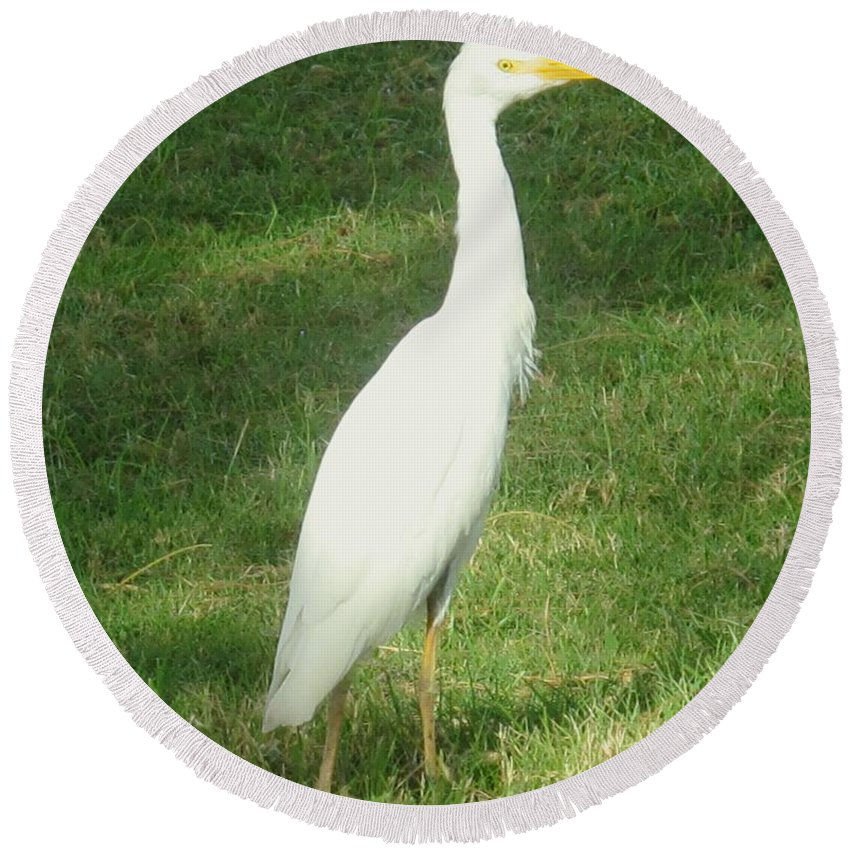 Egret Round Beach Towel featuring the photograph Egret Posing by Ian MacDonald