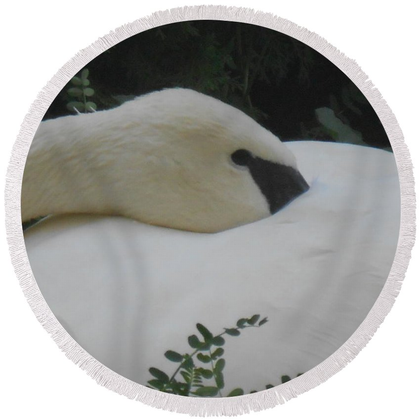 Trumpeter Swan Round Beach Towel featuring the photograph Elegant Beauty by LKB Art and Photography