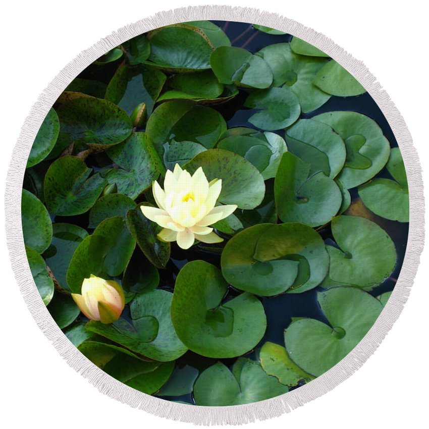 Water Lily Round Beach Towel featuring the photograph Elegant Water Lily by Sherry Oliver
