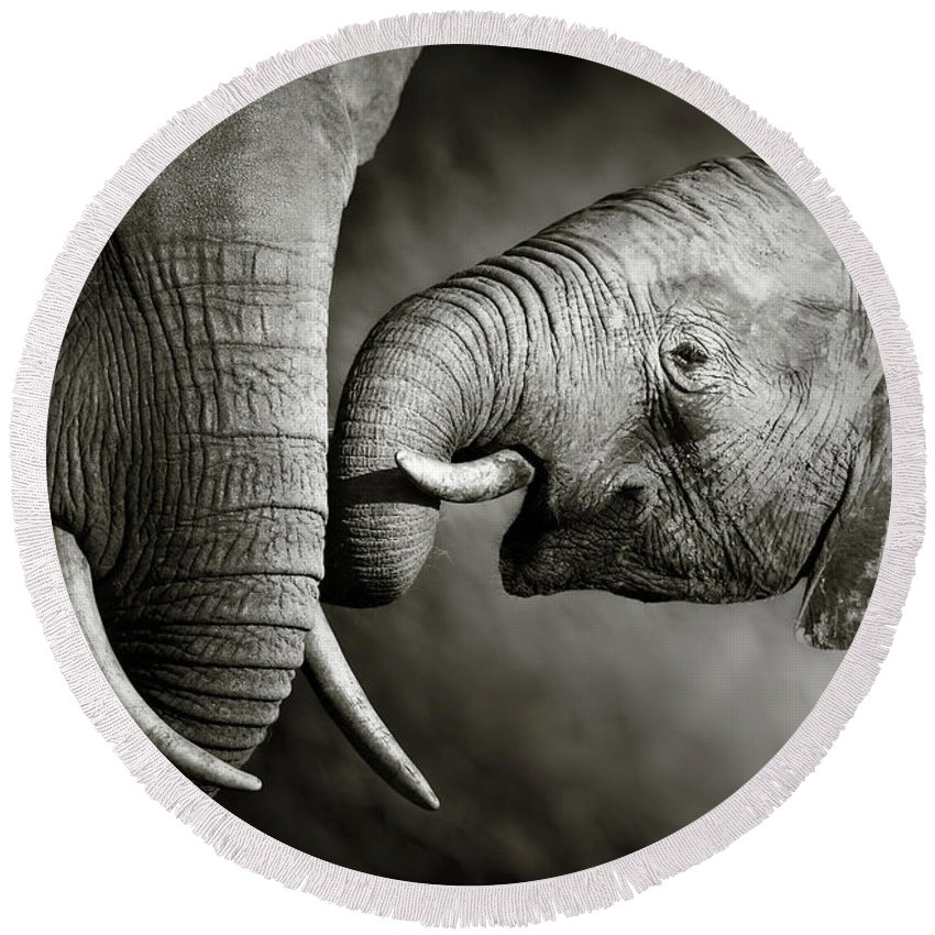 Elephant; Interact; Touch; Gently; Trunk; Young; Large; Small; Big; Tusk; Together; Togetherness; Passionate; Affectionate; Behavior; Art; Artistic; Black; White; B&w; Monochrome; Image; African; Animal; Wildlife; Wild; Mammal; Animal; Two; Moody; Outdoor; Nature; Africa; Nobody; Photograph; Addo; National; Park; Loxodonta; Africana; Muddy; Caring; Passion; Affection; Show; Display; Reach Round Beach Towel featuring the photograph Elephant affection by Johan Swanepoel