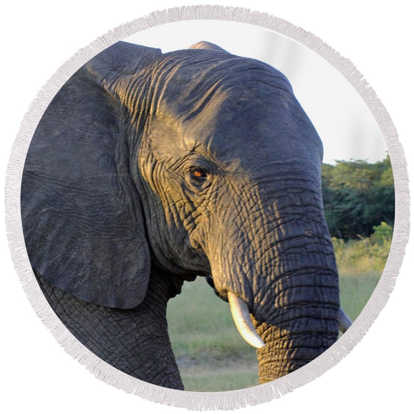 Elephant Close Up Round Beach Towel featuring the photograph Elephant Close Up by Tony Murtagh