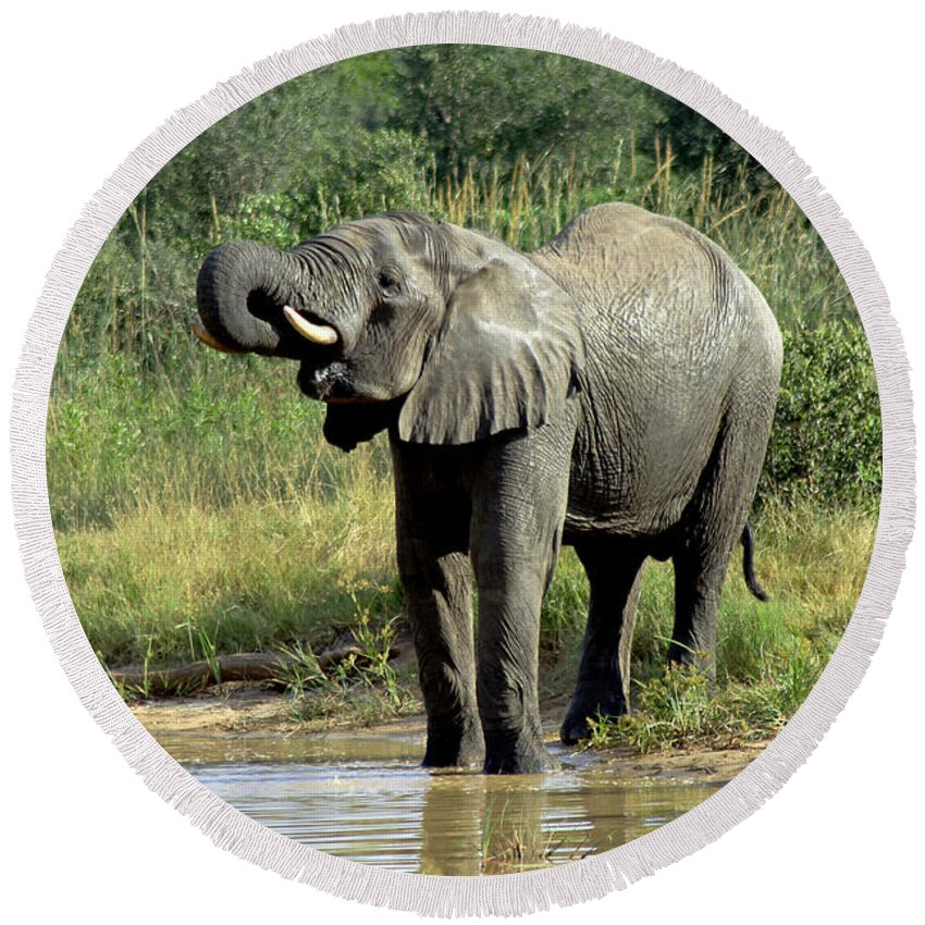 Elephant Drinking Round Beach Towel featuring the photograph Elephant Drinking by Tony Murtagh