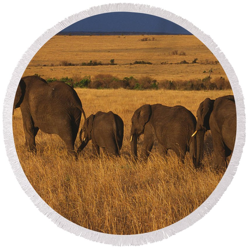 Elephants Round Beach Towel featuring the photograph Elephant Family - Sunset Stroll by Sandra Bronstein