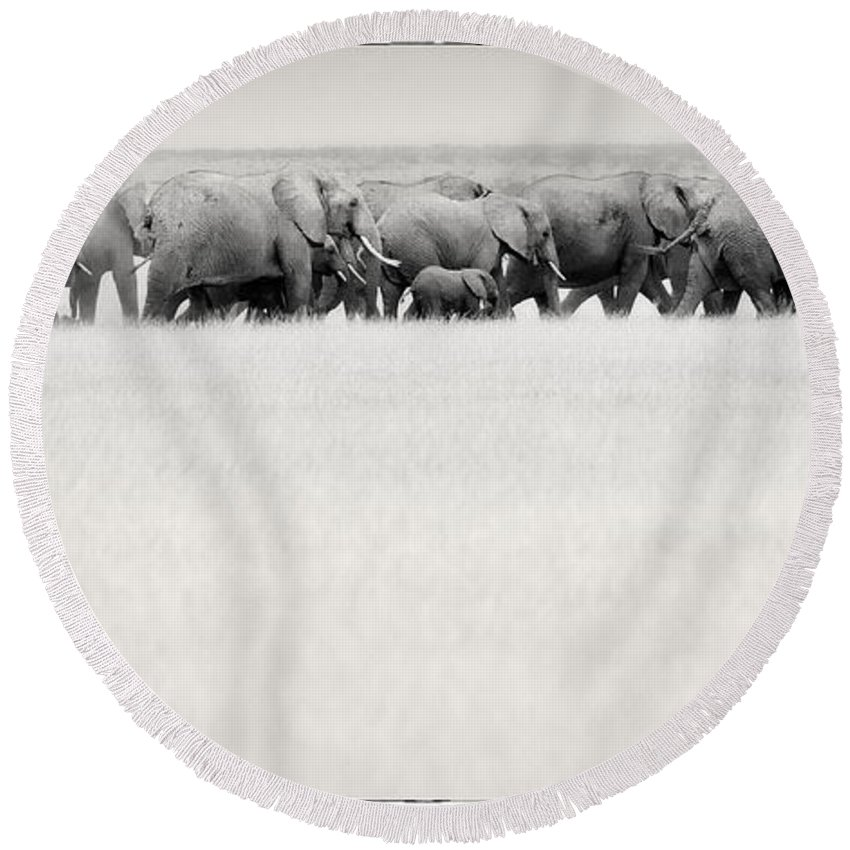 Elephants Round Beach Towel featuring the photograph Elephant Herd East Africa by Jack Daulton