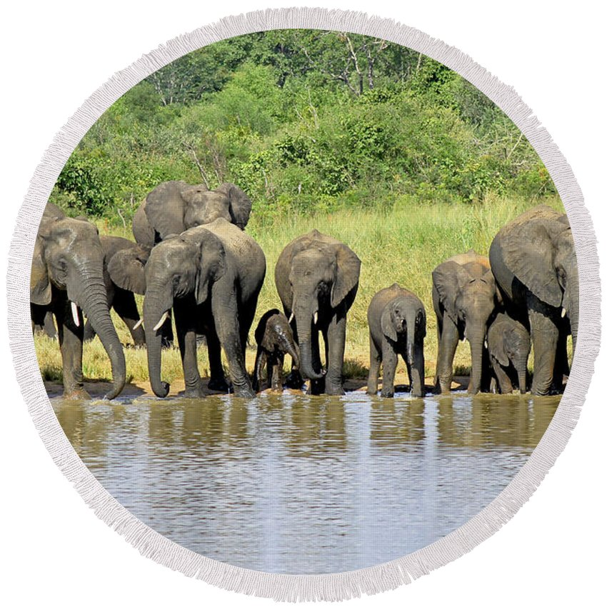 Elephants At The Waterhole Round Beach Towel featuring the photograph Elephants At The Waterhole  by Tony Murtagh