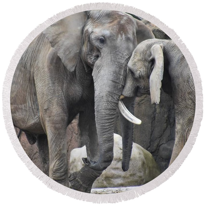 Elephant Round Beach Towel featuring the photograph Elephants Playing 2 by Flo McKinley