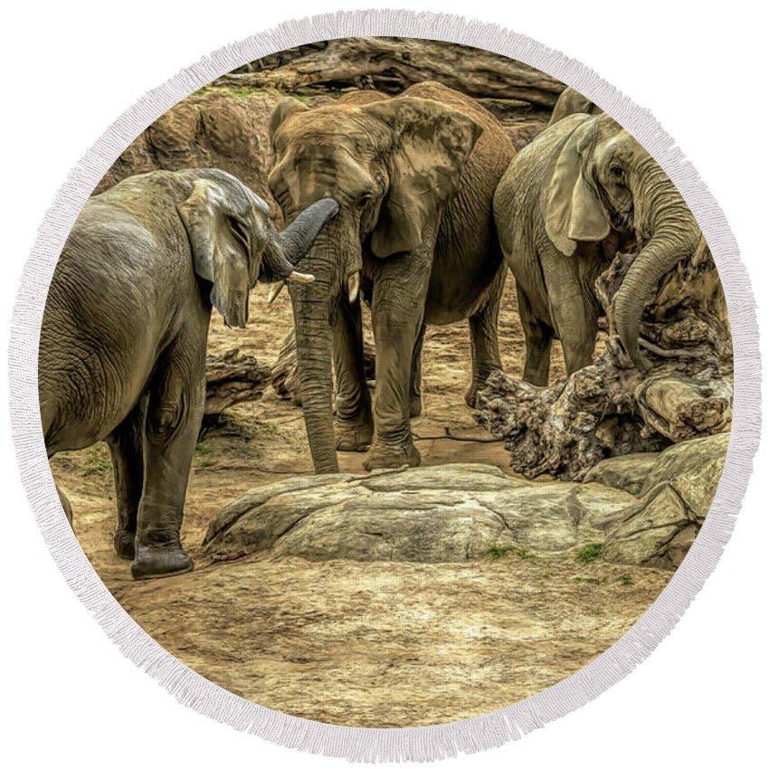 Elephants Round Beach Towel featuring the photograph Elephants Social by David Pine
