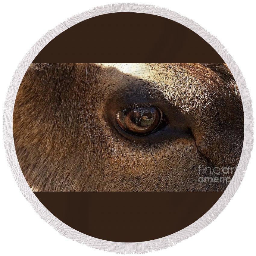 Elk Eye Close Up Round Beach Towel featuring the photograph Elk Eye Close Up by Jane Butera Borgardt