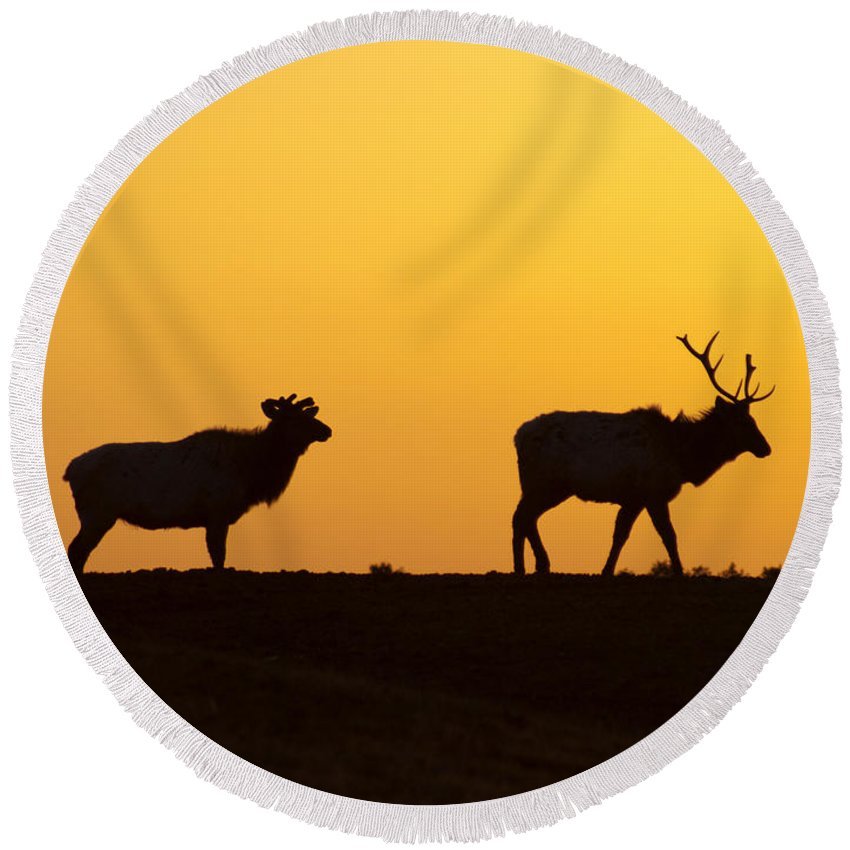 Animal Round Beach Towel featuring the photograph Elks In Silhouette by Anthony Totah
