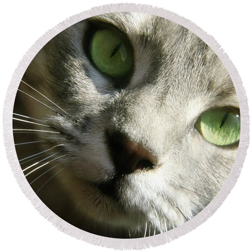 Cat Portrait Round Beach Towel featuring the photograph Elsie by Candace Roberts