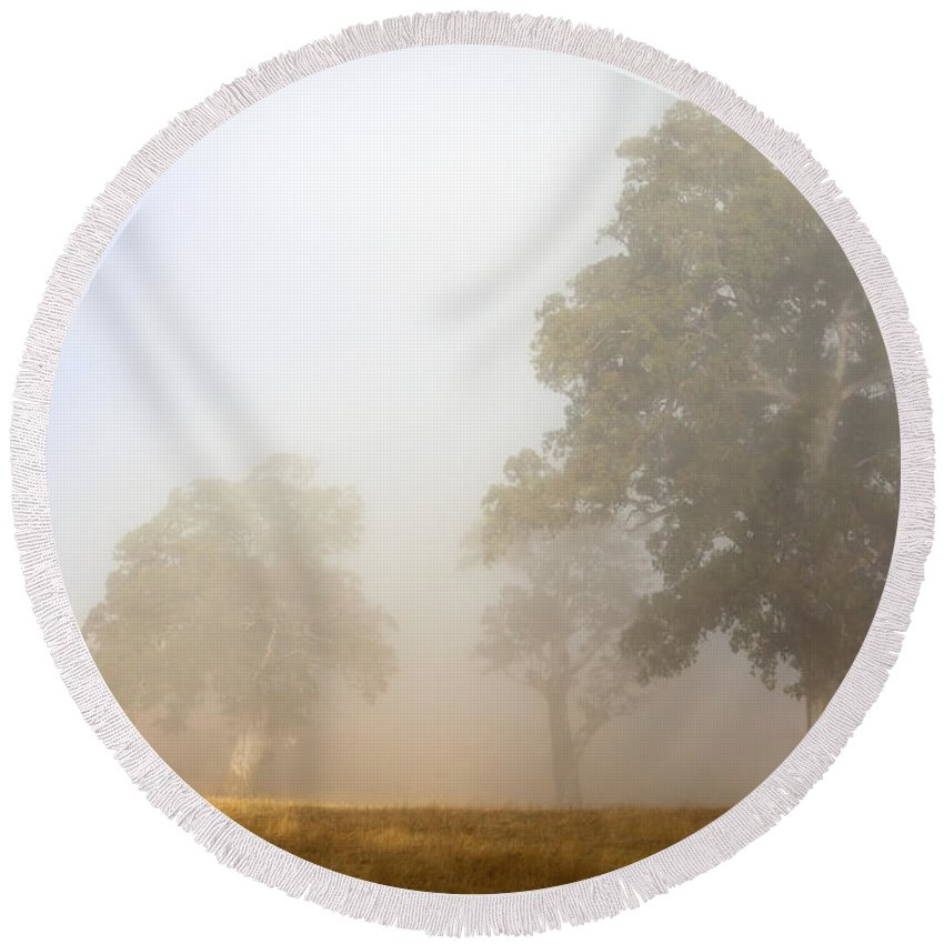 Gum Tree Round Beach Towel featuring the photograph Emerging From The Fog by Mike Dawson