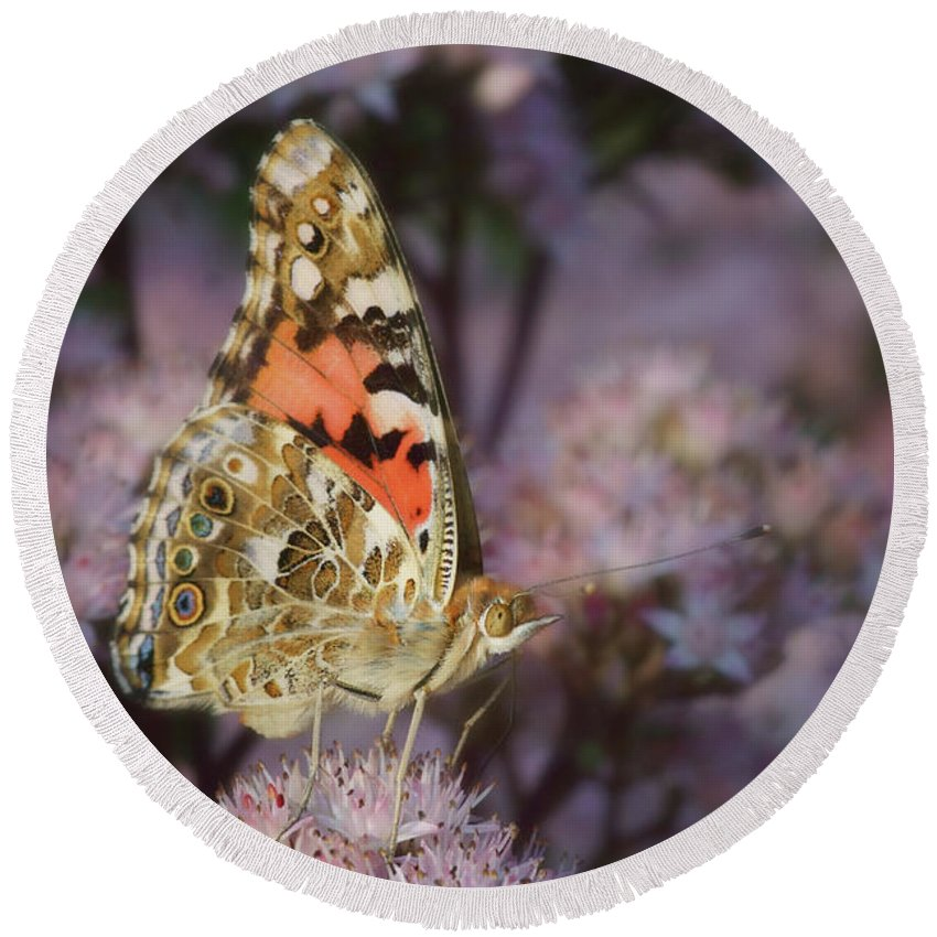 Butterfly Round Beach Towel featuring the photograph En Garde - Painted Lady - Butterfly by Nikolyn McDonald