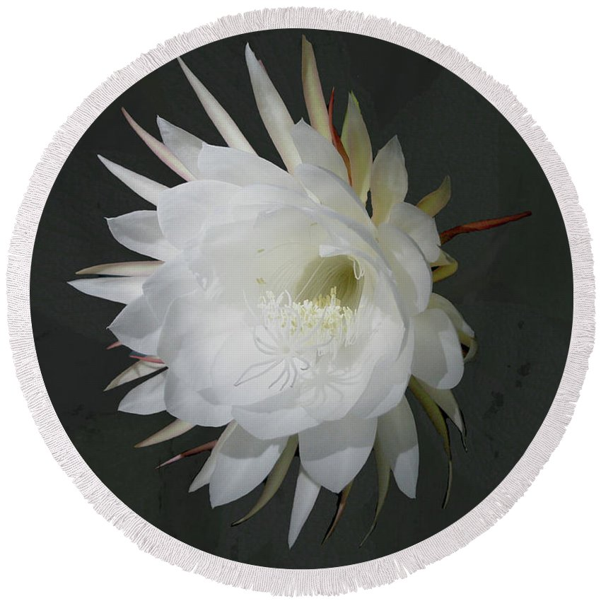 Flower Round Beach Towel featuring the photograph Epiphyte Blossom - Epiphyllum Oxypetalum by Mother Nature
