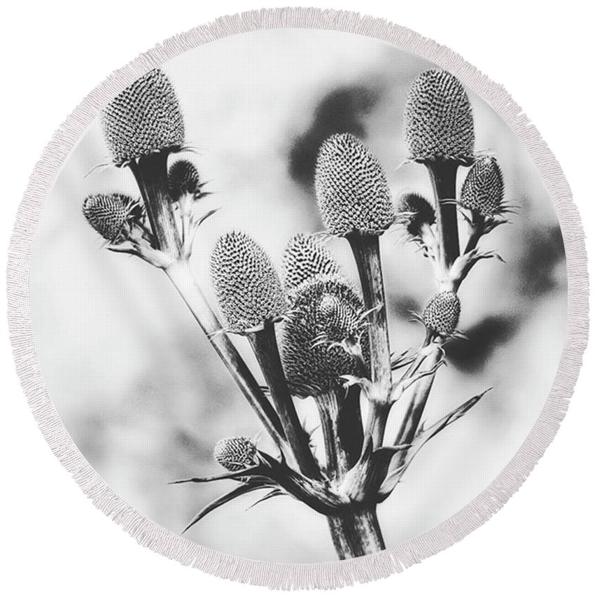 Beautiful Round Beach Towel featuring the photograph Eryngium #flower #flowers by John Edwards