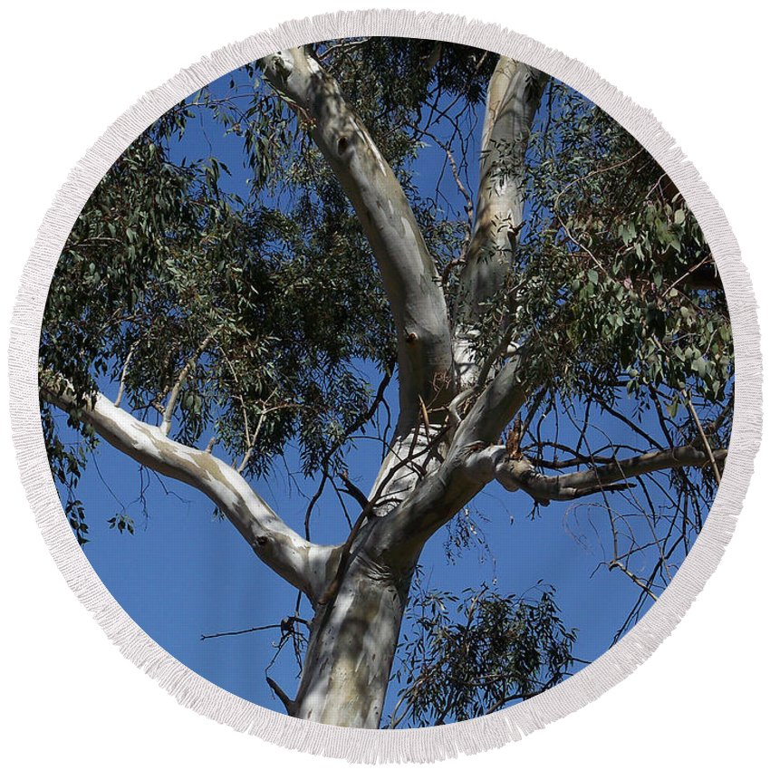 Trees Round Beach Towel featuring the photograph Eucalyptus by Kathy McClure